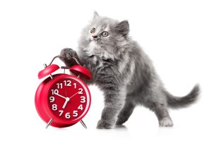 Cute kitten with red alarm-clock isolated on a white background
